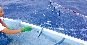 とびうお漁イメージ